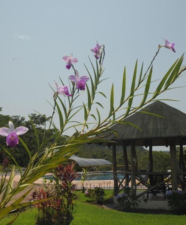 Swimming pool Orkidea Orkidea Lodge Puyo