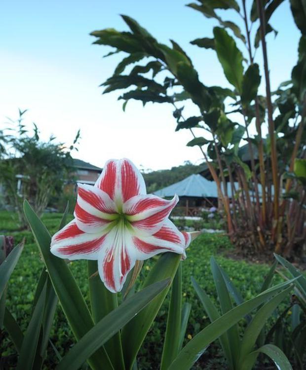 Flora Orkidea Orkidea Lodge Puyo
