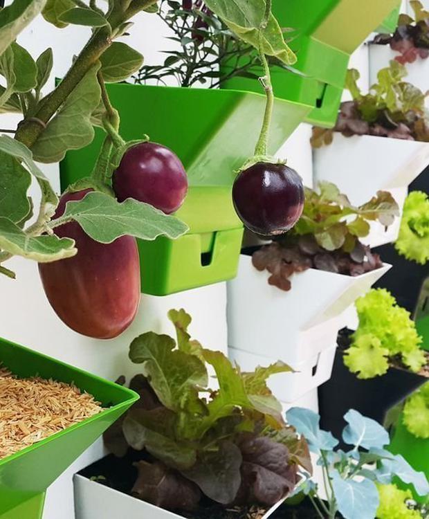 Orchard Biohotel Organic Suites Bogotá