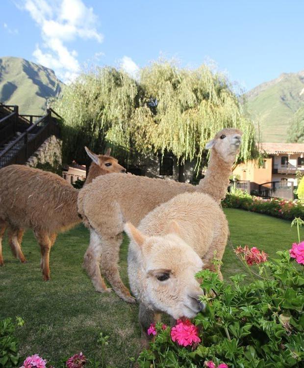 Jardines Yucay Sonesta Hotel Posadas del Inca Yucay Yucay, Peru